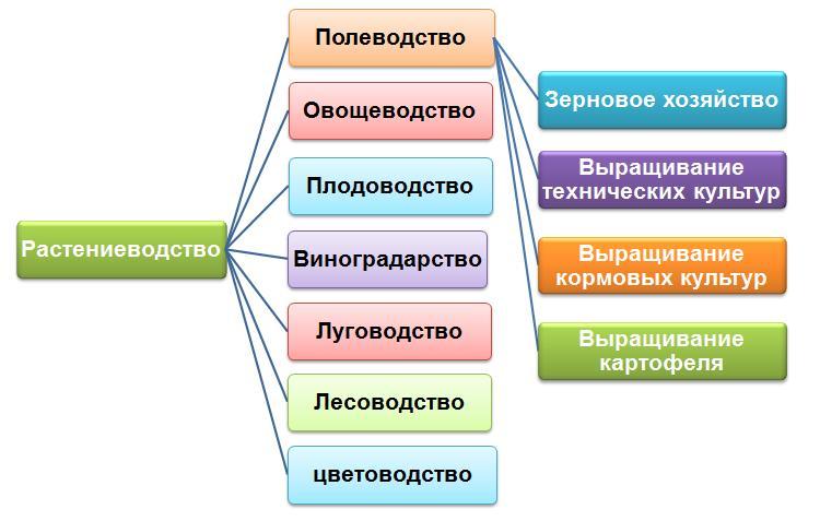 http://umelye-ruchki.ucoz.ru/tekhnologija/rastenievodstvo.jpg
